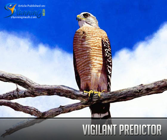 Vigilant Predictor – What, Who, When, How
