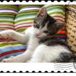 stunningmesh-postage-stamps (35)