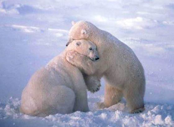 Love Hug