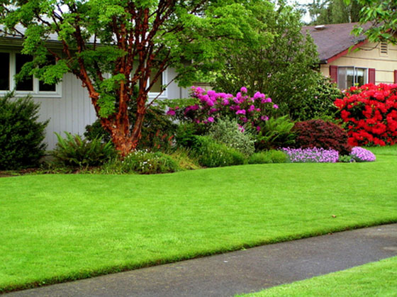 Beautiful decorated lawn