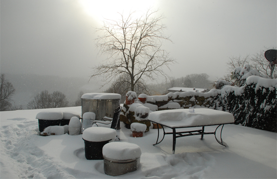 Preparing your patio garden for winter