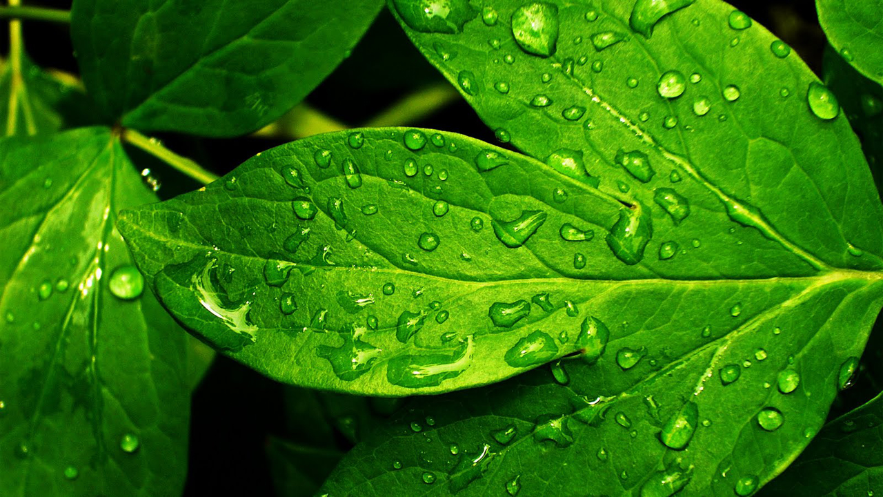 Green nature eco friendly wallpapers for Green wallpaper